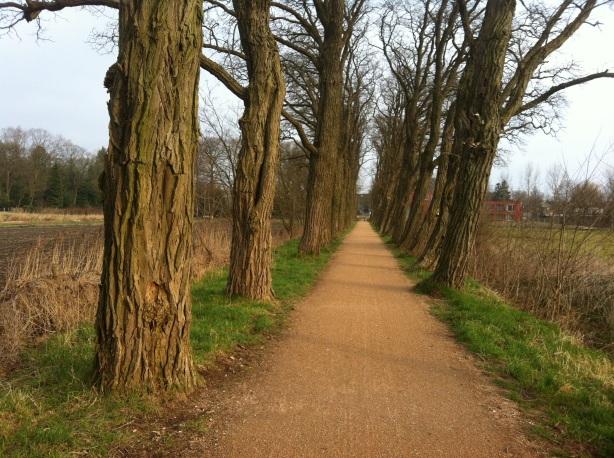 Bare trees waiting
