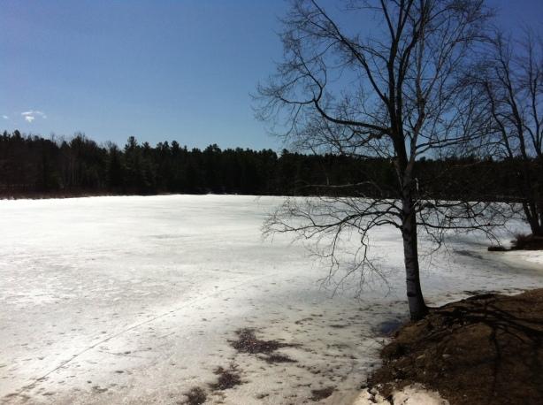 Lake in Macomb Park