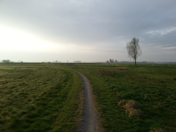 Path through the fields