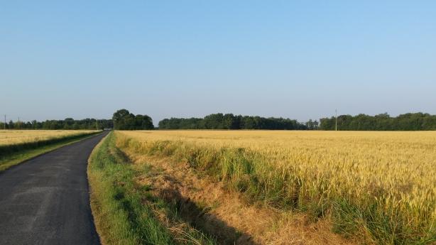 Early morning fields