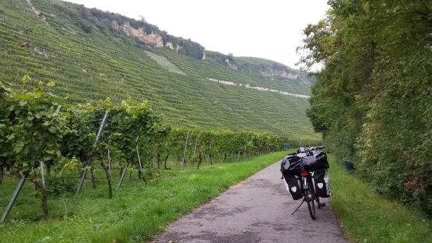 Vineyard on the Neckar