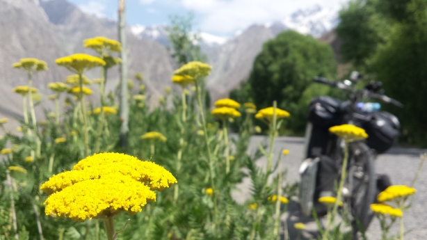 Flowers in the valley