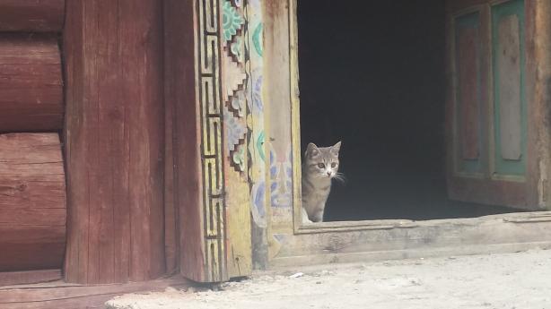 The cat looks on