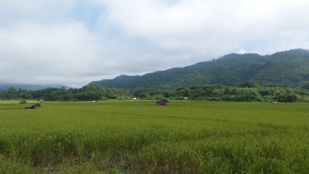 Fields near Luang Namtha