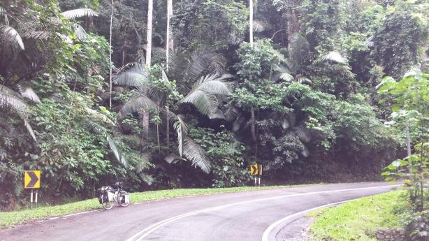 Dense jungle near Kuala Lumpur