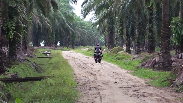 Cycling in the palm plantations