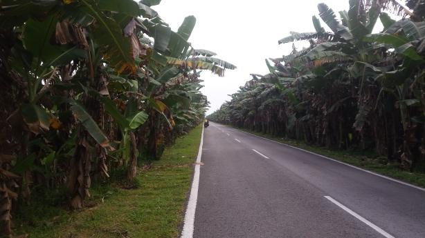 Through the banana trees