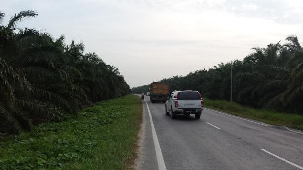 Palm plantations