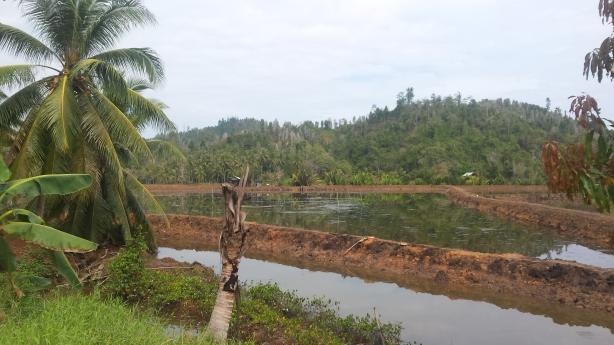Water fields