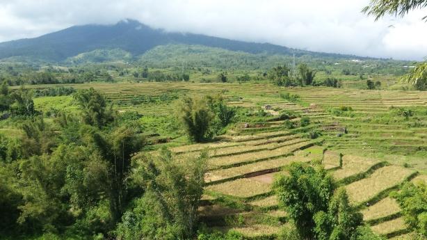 Dry rice paddy