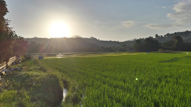 The rice paddy out the front door
