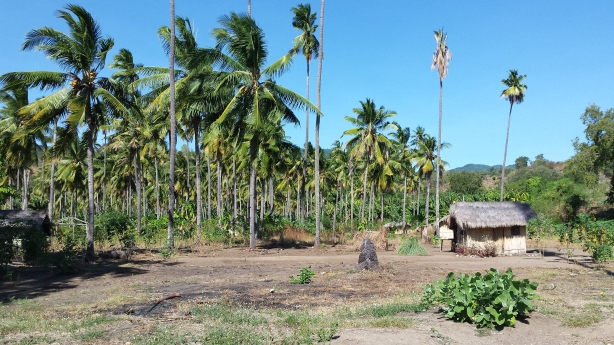 House amongst the palms