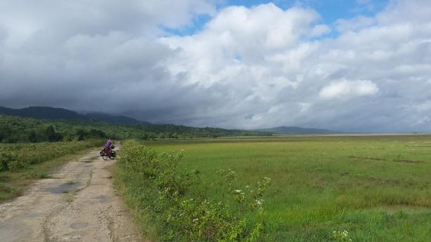 Grassy plain