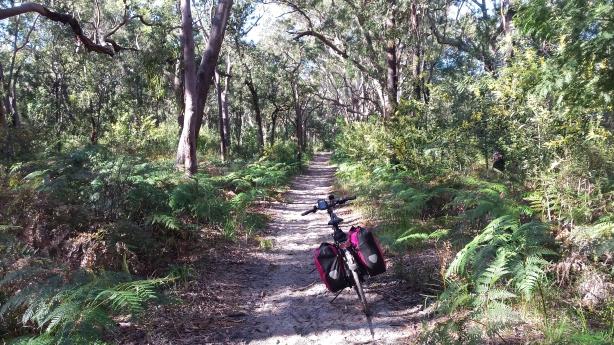 Boyces Trail