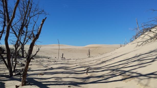 The dunes start