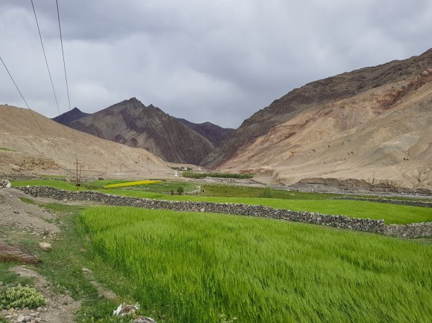The greenery of Ladakh