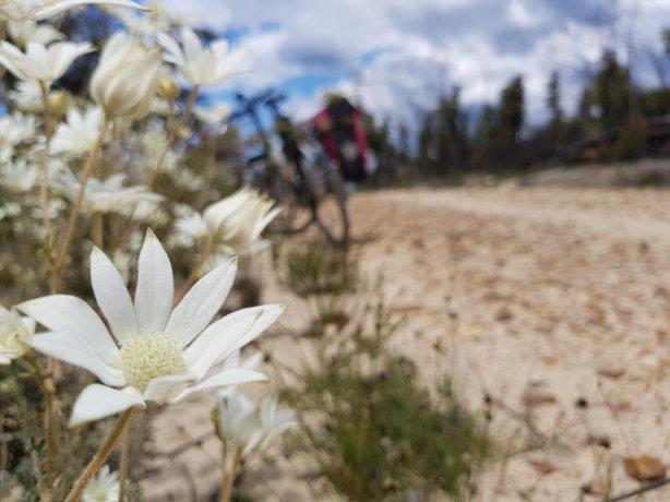 Oaks Trail