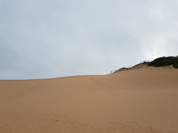 The Cronulla sand dunes