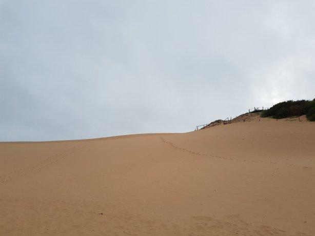 The Cronulla sand dunes