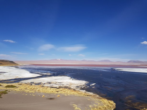Spot the flamingos on Laguna Colorada