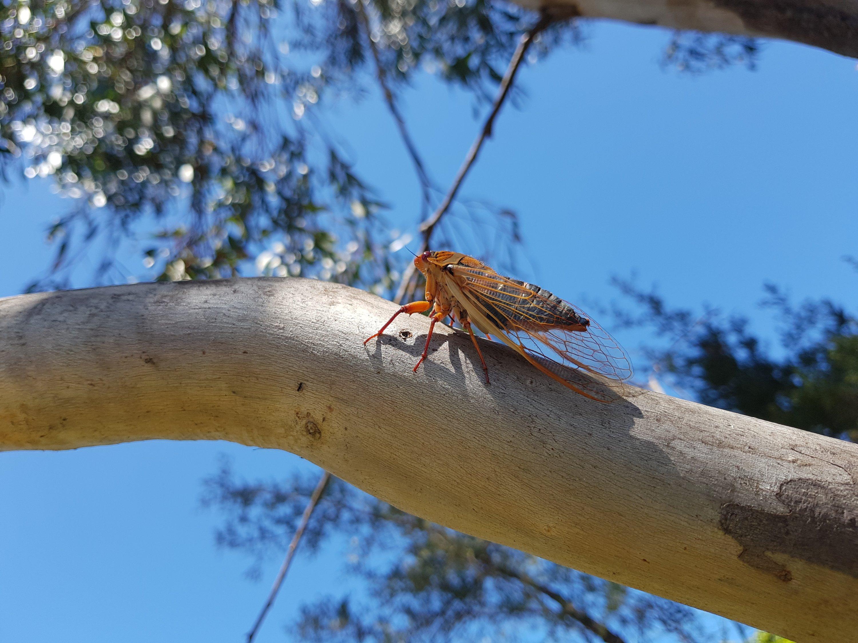 The cicadas chirped
